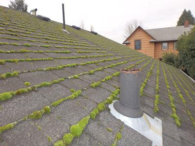 Moss on Roof In Iowa